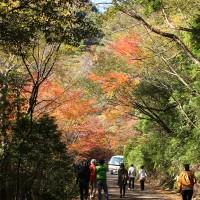 神殿橋に近づくにつれ紅葉も色濃く